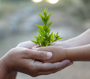hands holding a baby tree