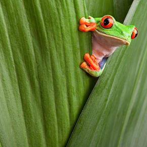 Frog in leaves