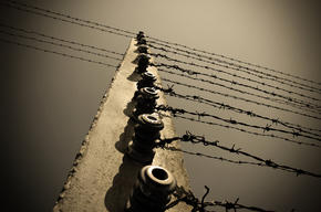 barbed-wire fence