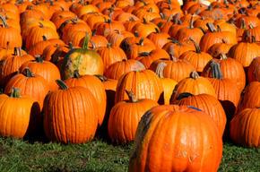 Halloween math lessons large
