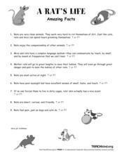 A Rat's Life Worksheet