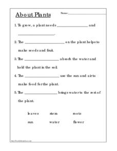 About Plants Worksheet