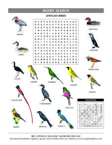 African Birds Lesson Plan