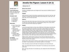 Amelia the Pigeon: What Am I? Lesson Plan