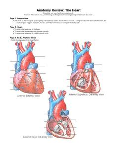 Anatomy Review: The Heart Worksheet
