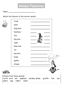 Animal Features Lesson Plan
