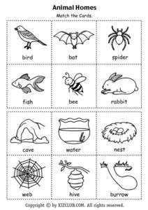 animal homes kindergarten 2nd grade lesson plan lesson planet. Black Bedroom Furniture Sets. Home Design Ideas