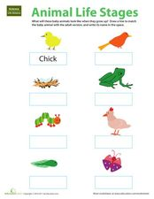 Animal Life Stages Worksheet
