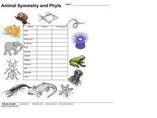 Animal Symmetry and Phyla Lesson Plan