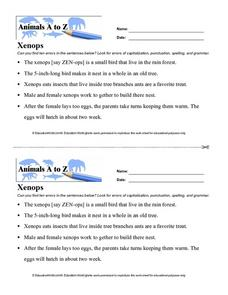 Animals A to Z: Xenops Worksheet