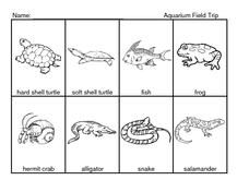 Aquarium Field Trip Worksheet