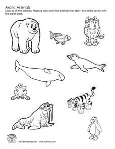 Arctic Animals Worksheet