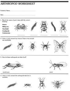 Arthropod Worksheet Worksheet