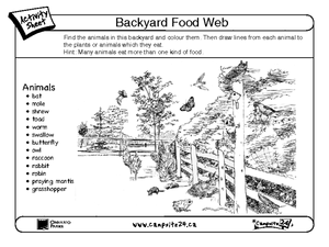 Free food chain worksheets 6th grade