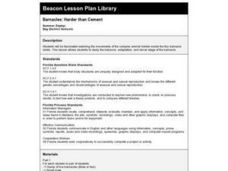 Barnacles: Harder than Cement Lesson Plan