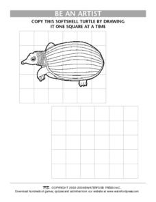 Be an Artist: Softshell Turtle Lesson Plan