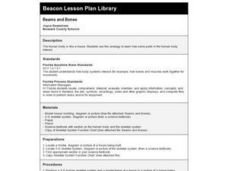 Beams and Bones Lesson Plan