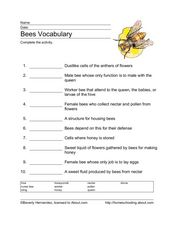 Bees Vocabulary Worksheet
