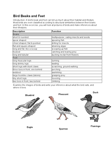 Bird Beaks and Feet 5th - 10th Grade Worksheet | Lesson Planet