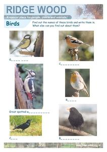 Bird Identification and Naming- Fill in the Blanks Worksheet Worksheet