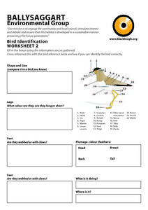 Bird Identification Worksheet 2 Worksheet