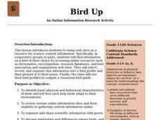 Bird Up Lesson Plan