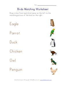 Birds Matching Worksheet Worksheet