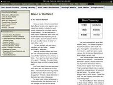 Bison or Buffalo? Lesson Plan