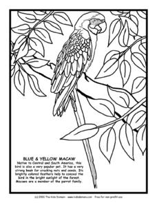 Blue and Yellow Macaw Information and Coloring Page Worksheet