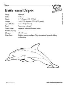 Bottle Nosed Dolphin Worksheet
