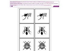Bugs: Picture Cards in Pairs Worksheet