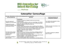 Caterpillar Camouflage Lesson Plan