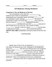 Cell Membrane Coloring Worksheet 7th   9th Grade Worksheet ...