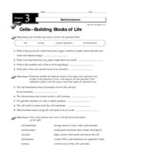 Cells - Building Blocks of Life Worksheet
