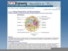 Cellular Respiration and bioremediation Lesson Plan