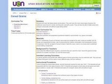 Cereal Grains Lesson Plan