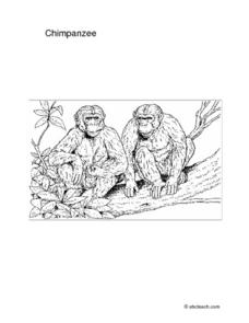 CHIMPANZEE Worksheet