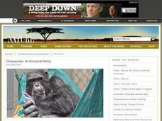 Chimpanzees: We're Not Entertained Lesson Plan