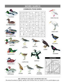 Common Pond Birds Word Puzzle Lesson Plan