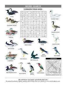 Common Pond Birds Word Search Lesson Plan