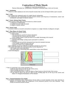 Contraction of Muscle Worksheet