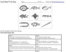 Coral Reef Fish Key Worksheet