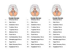 Printables Cranial Nerves Worksheet cranial nerves worksheet davezan 9th 12th grade lesson planet