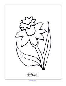 Daffodil--Back Line Drawing Lesson Plan