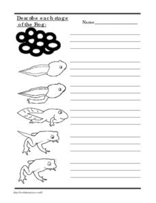 Describe Each Stage of the Life Cycle of the Frog Worksheet