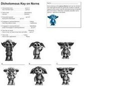 Dichotomous Key Worksheet