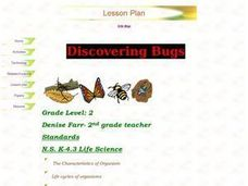 Discovering Bugs Lesson Plan