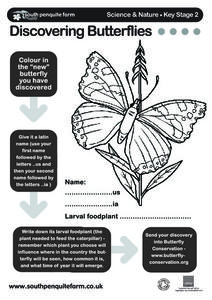Discovering Butterflies... Worksheet