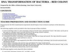 DNA Transformation of Bacteria - Red Colony Lesson Plan