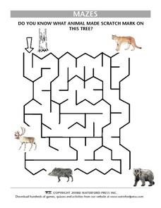 Do You Know What Animal Made Scratch Mark on This Tree? - Mazes Lesson Plan